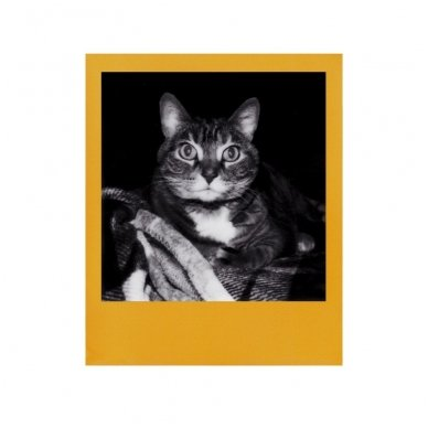 Fotoplokštelės Polaroid Originals B&W 600 Color Frame 8 vnt 5
