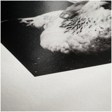 Hahnemühle Photo Rag Baryta + Portfoliobox A4 2